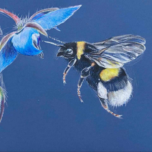 Bees-and-Butterflies image